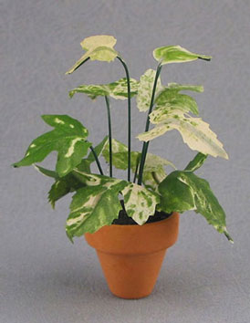 Large Variegated Plant